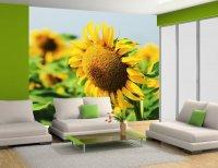 Fototapety w kwiaty