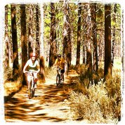jazda rowerem po lesie