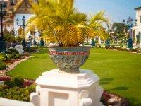 egzotyczne rośliny Tajlandii